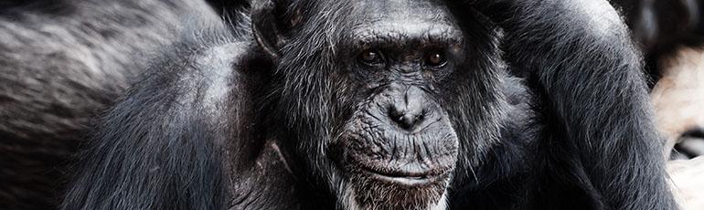 philosophie-et-action-singe